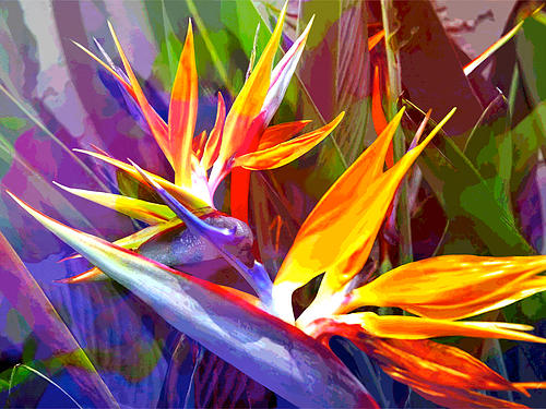 bird-of-paradise-in-blue-gold-red-.jpg