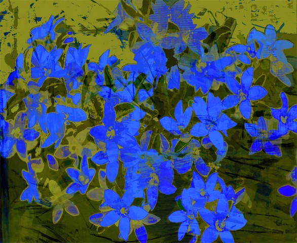 Bright colours of Australian flora, Flower Girl Blue by Jan Neil, modern art, Print Decor Melbourne
