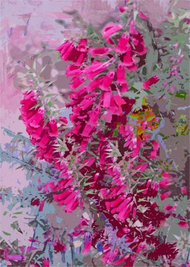 Bright colours of Australian flora, Heath 4 by Jan Neil, modern art, Print Decor Melbourne
