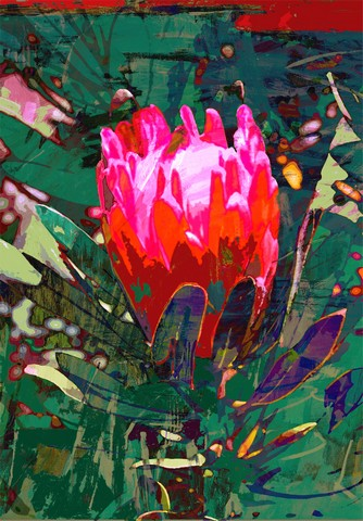 Bright colours of Australian flora, Protea by Jan Neil, modern art, Print Decor Melbourne