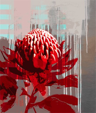 Bright colours of Australian flora, Waratah by Jan Neil, modern art, Print Decor Melbourne
