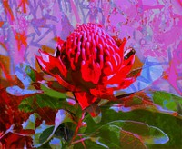 Bright colours of Australian flora, Jan Neil modern art Print Decor Melbourne