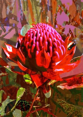Bright colours of Australian flora, Waratah 2 by Jan Neil, modern art, Print Decor Melbourne
