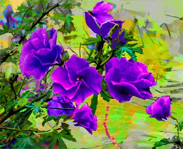 Bright colours of Australian flora, West Coast Gem by Jan Neil, modern art, Print Decor Melbourne
