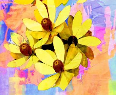 Bright colours of Australian flora, Yellow Protea Horizontal by Jan Neil, modern art, Print Decor Melbourne